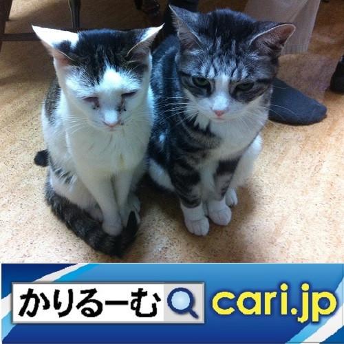 その違いってなんですか? cari.jp