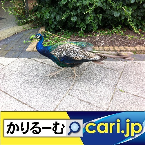 GWは自動車メーカーが設立した企業博物館へ! cari.jp