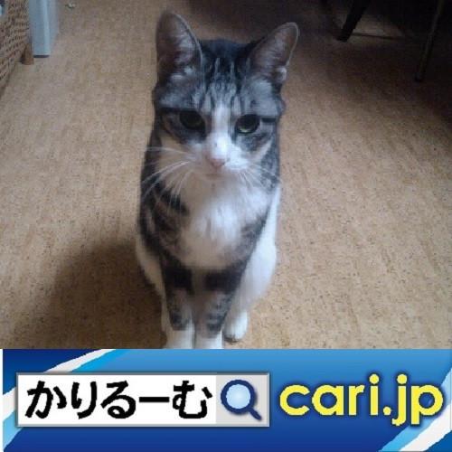 国交省が推奨している「トラガール」とは!? cari.jp