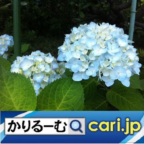 私がやっている日焼け対策 cari.jp