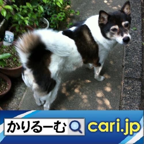 2020年5月分 鈴木社長の日誌・日記・備忘 cari.jp